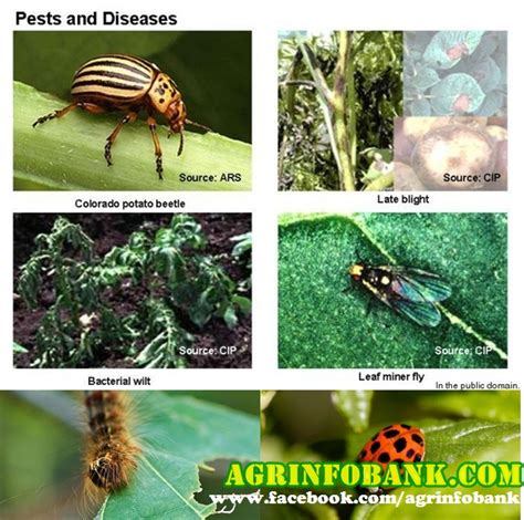 list of garden pests a z list of significant list of plant diseases and pests