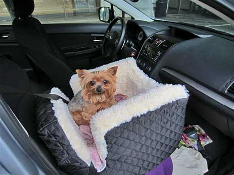 yorkie car seat subaru and photographs subaru owners their dogs