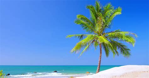with palm tree island idyllic coast of tropical island with palm