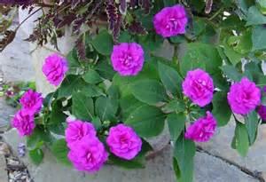 bear creek nursery annual plants common names plant