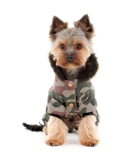 yorkie puppy coat does my pet need a winter coat argos pet insurance