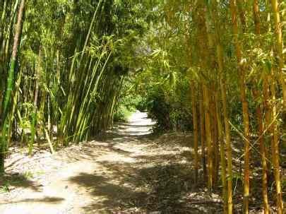 Quail Botanical Gardens Encinitas California San Diego Botanical Garden Quail Botanical Garden San Diego Botanic Garden