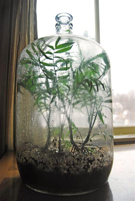 terrarium in large vintage bottle terrarium pinterest