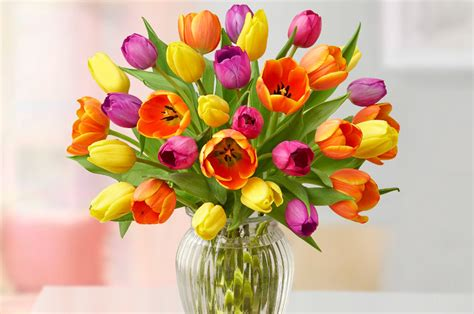 Care For Tulips In Vase by Facts About Tulips Tulip Care Tulip History Petal Talk