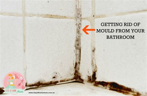 How To Get Rid Of Mould In Bathroom Walls getting rid of mould from your bathroom stay at home