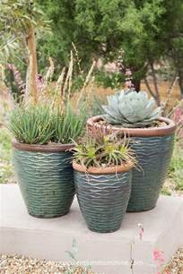 how to water succulent plants succulents and sunshine