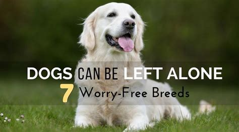 can dogs be dogs that can be left alone 7 worry free breeds hi5dog