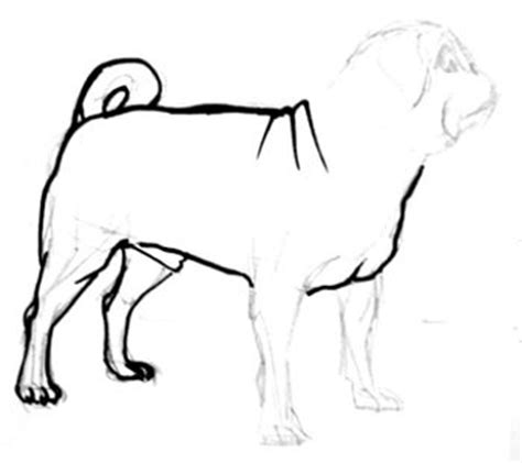 how to draw pugs step by step how to draw a pug
