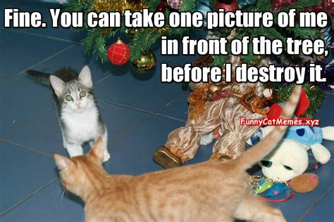 Cat Christmas Tree Meme - cat and the christmas tree funny kitten meme