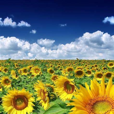 imagenes de jardines increibles paisajes incre 237 bles panorandapp twitter