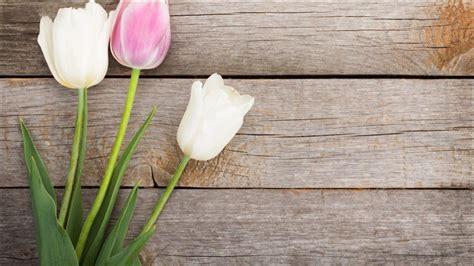 wallpaper bunga unik inilah 12 wallpaper bunga tulip putih yang menakjubkan