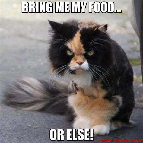 Cat Food Meme - how i feel about dieting a cat meme story ariele sieling