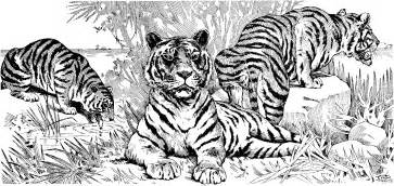 tigers free coloring pages art coloring pages
