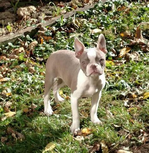 wind hill puppies testimonials wind hill puppies