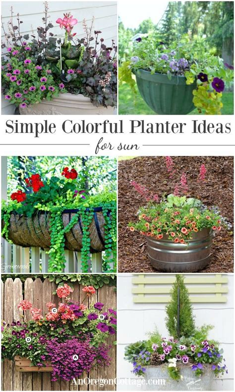 simple colorful planter ideas for sun gardening viral
