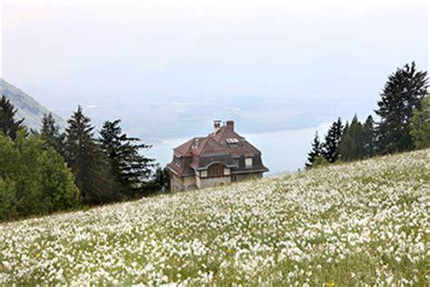 wilde bloemen in duitsland wilde narcissen in de alpen seasons