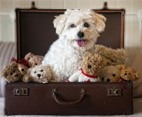 places that allow dogs top pet friendly places hotels and airlines u s news travel