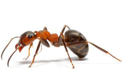 Ameisen Auf Der Terrasse 4711 by Anleitungen Im Bereich Garten Zum Thema Ameisen