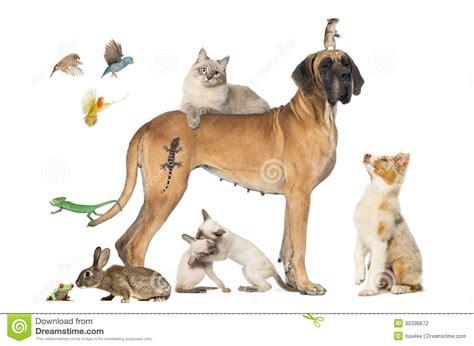 fotos animales juntos grupo de animales dom 233 sticos junto fotograf 237 a de archivo