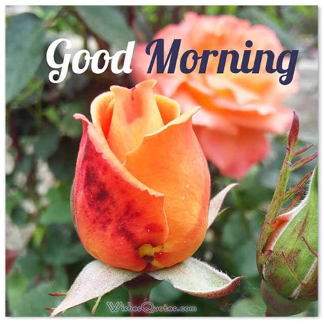 sweet and morning quotes and messages 200 sweet morning messages with adorable morning
