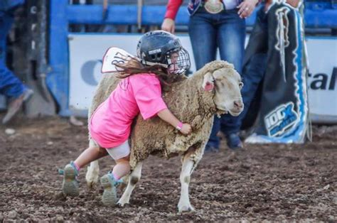 Eagle County Records Record Setting Year For Eagle County Fair Rodeo Vaildaily