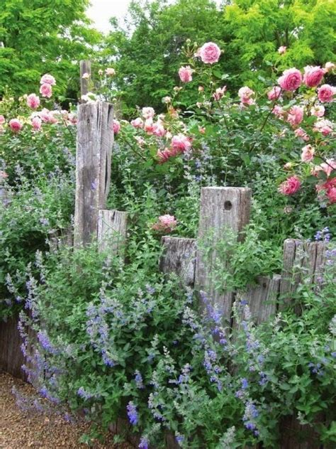 Country Cottage Plants by Country Cottage Garden Diy Garden Decorations And Ideas