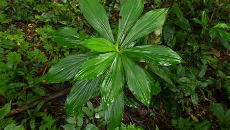plants found in tropical evergreen forest evergreen forest cristalino lodge