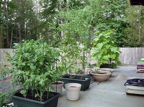 Vegetables In Containers Gardening Pinterest Container Vegetable Garden Ideas