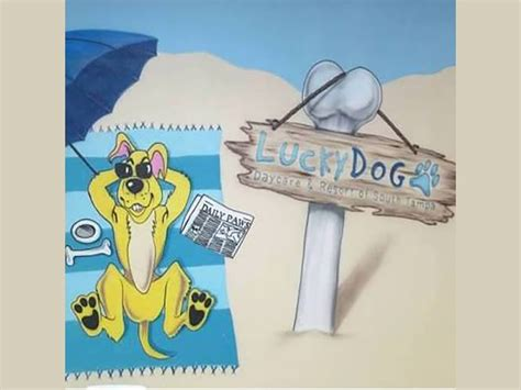 lucky puppy daycare ta s lucky daycare investigation following deaths