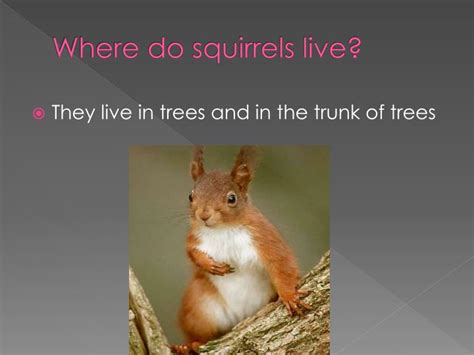 best 28 how do squirrels live in the where do