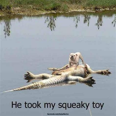 why do dogs like squeaky toys dead alligator took s squeaky dump a day