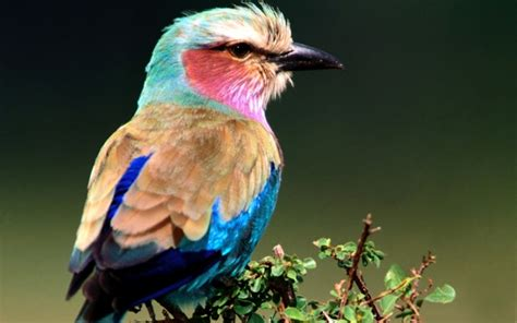 colorful birds wallpaper hd latest colorful birds hd desktop wallpapers background
