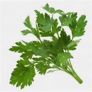 herb hound parsley