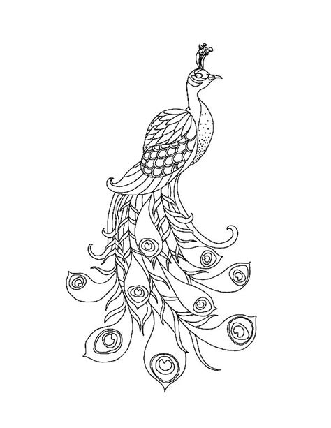 adult coloring peacock feather coloring pages