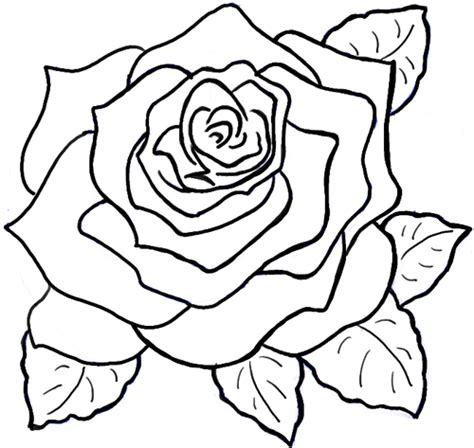 how to draw doodle roses how to draw roses opening in bloom step by step