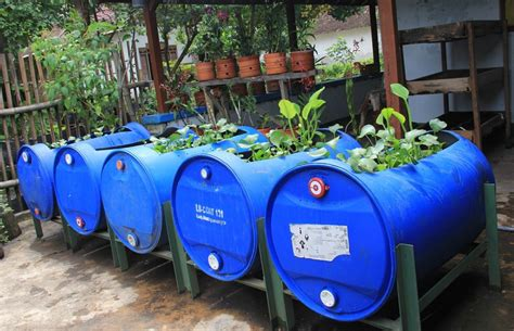 Bibit Belut Di Semarang peluang usaha budidaya ternak belut dalam drum tak perlu