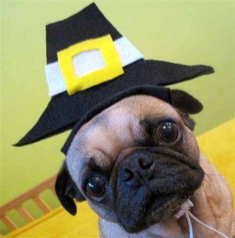 puppy thanksgiving puppy pilgrim fascinators thanksgiving hat