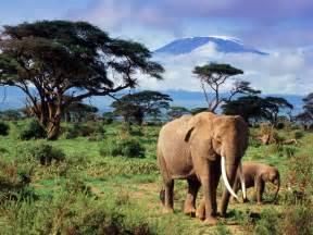 le elefant l 233 l 233 phant le monde