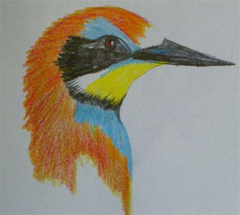 color pencil sketch bird colored pencil sketch sumamystuff