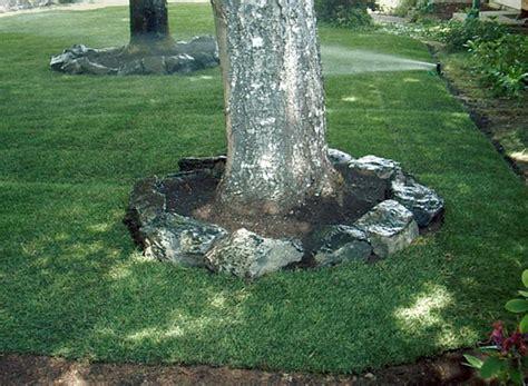 around tree landscaping landscaping ideas around trees