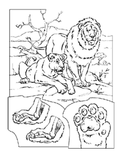 lion coloring pages national geographic blessed are the merciful coloring page coloring pages