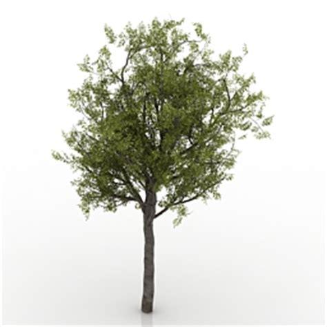 free tree model tree free 3d models