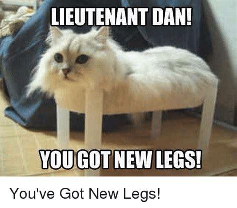 Lesbian Cat Meme - 25 best memes about cat cat memes