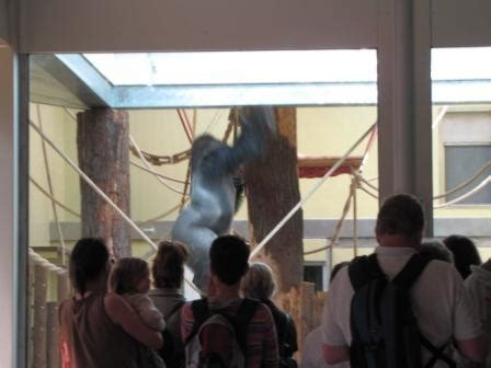 zoologischer garten berlin ag hardenbergplatz 8 kinder ausflug zoobesuch zoologischer garten berlin