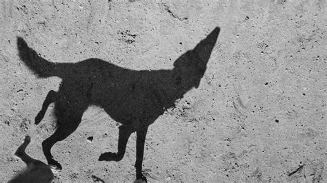 In Shadows a dog s world in shadow the new york times