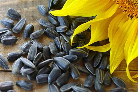 is black sunflower seeds for birds what is black sunflower seed