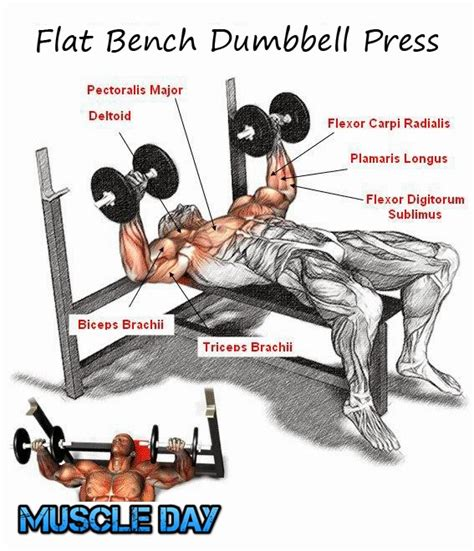 flat dumbell bench press سبتمبر 2013 muscle day