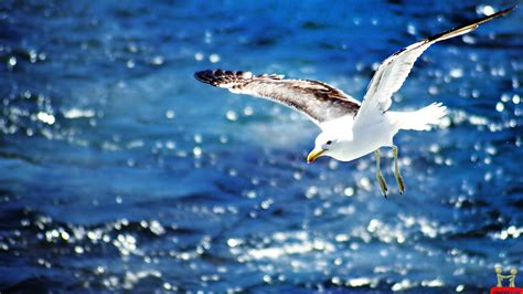 flying on seagull flying on the new hd wallpapers all hd