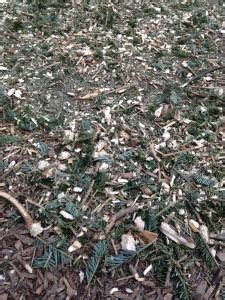 recycling christmas trees for myriad uses freshkills
