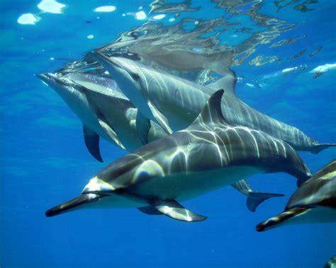 imagenes para fondo de pantalla delfines fondo de delfines a resoluci 243 n 1280x1024 fondo de